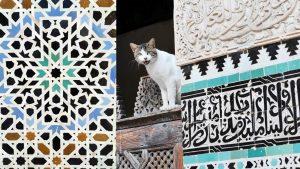 koty-na-ulicach-Maroko